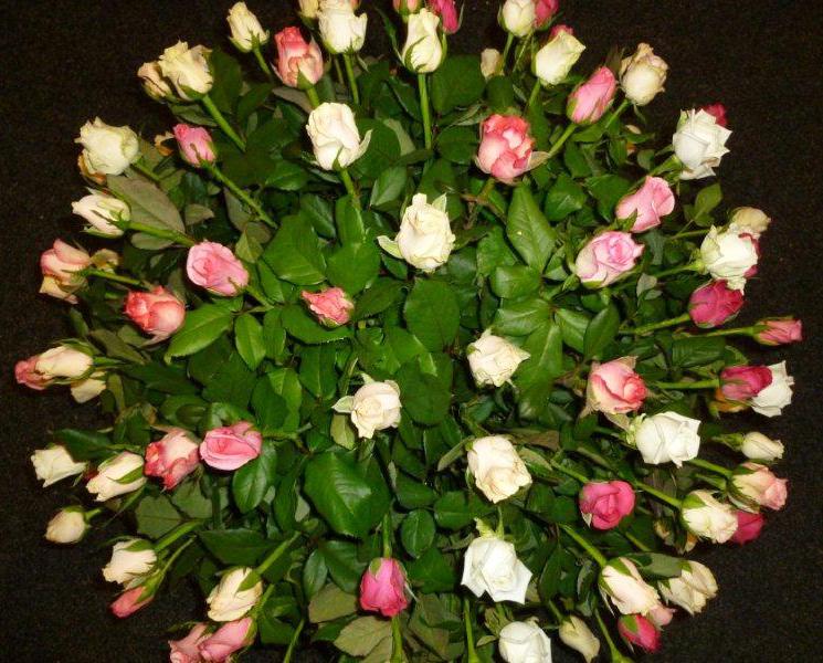 Floral-Roses1